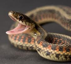 slangensteentje wmh