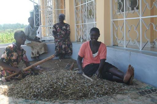 vrouwen 2 kenia
