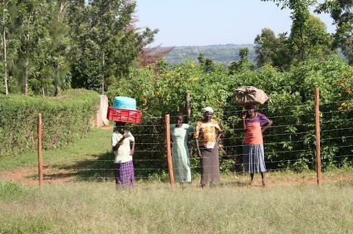 vrouwen project kenia