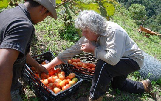 oogst duurzame landbouw ecuador ecassef